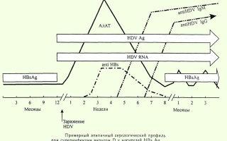 Маркеры гепатитов в и с — расшифровка данных анализа