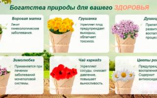 Лечение бесплодия народными средствами — травами, семенами