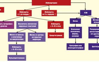 Лейкоциты в моче при беременности — нормальные значения и причины повышения