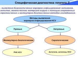 Гепатит С генотип 2: какой прогноз и как лечить