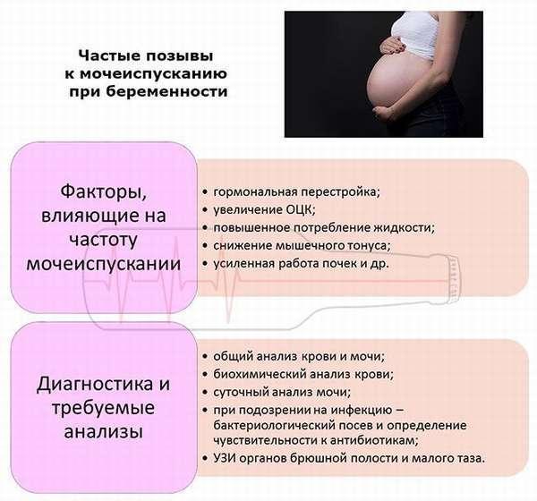 Частое мочеиспускание при беременности - причины, лечение