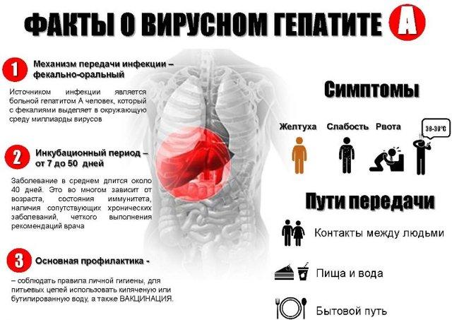 Профилактика гепатита А, Б, С, Д и Е