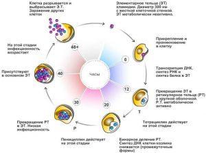 Инкубационный период хламидиоза - время появления симптомов