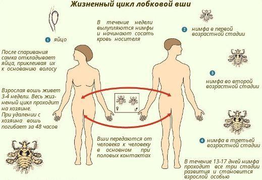 Педикулез - что это такое, симптомы и эффективное лечение