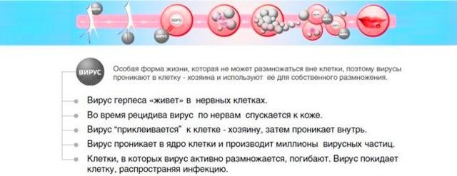 Оксолиновая мазь при герпесе - помогает ли она избавиться от вируса?