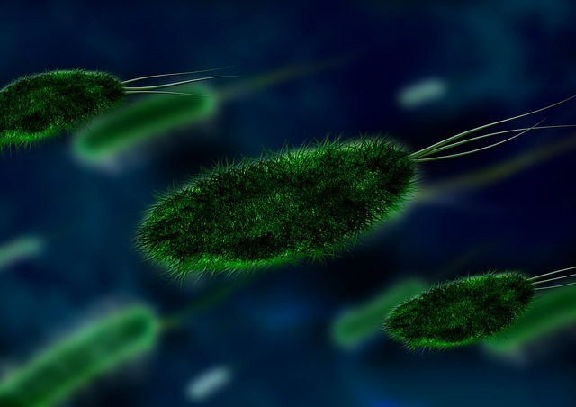Бактерии в моче - что это значит, какое лечение выбрать?