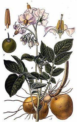 Мазь от папиллом и бородавок: цинковая, салициловая и Панавир