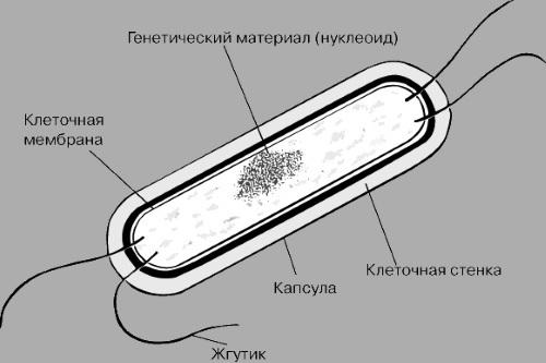 mycoplasma hominis у мужчин: симптомы, диагностика, лечение