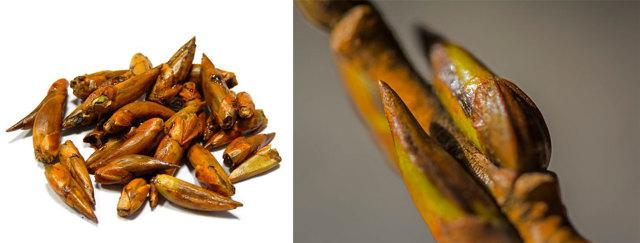 Хламидиоз - лечение народными средствами, травами, отварами