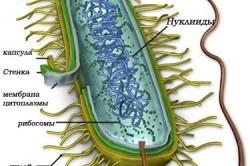 Микоплазмоз - лечение эффективными препаратами (таблетки, свечи, антибиотики)