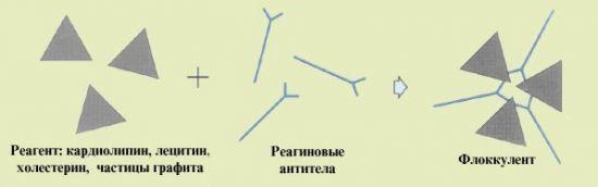 Сифилис rpr (РПР), показания, точность анализа, расшифровка