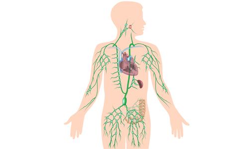 Герпес 7 типа у взрослых и детей, симптомы и лечение