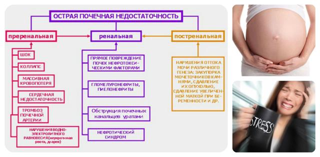 Кортизол в моче - норма суточного показателя, как правильно сдавать
