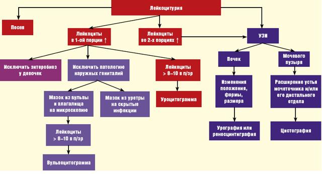 Лейкоциты в моче при беременности - нормальные значения и причины повышения