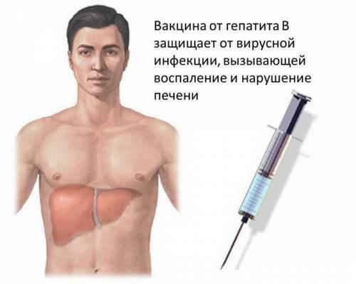 Беременность и прививка от гепатита В - можно ли делать