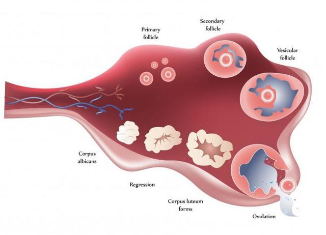 Боль в паху справа у женщины: причины, способы лечения
