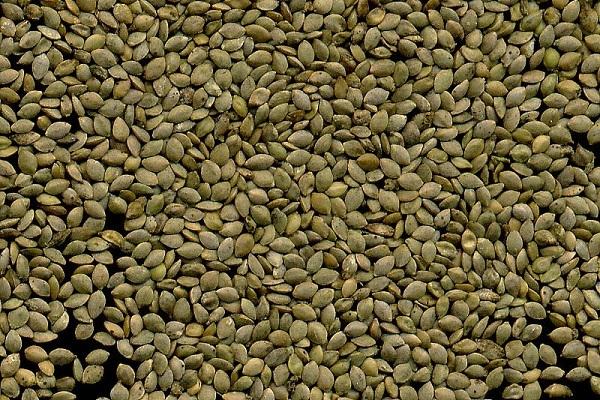 Семена крапивы для потенции - рецепты приготовления настойки, отвара и микроклизм